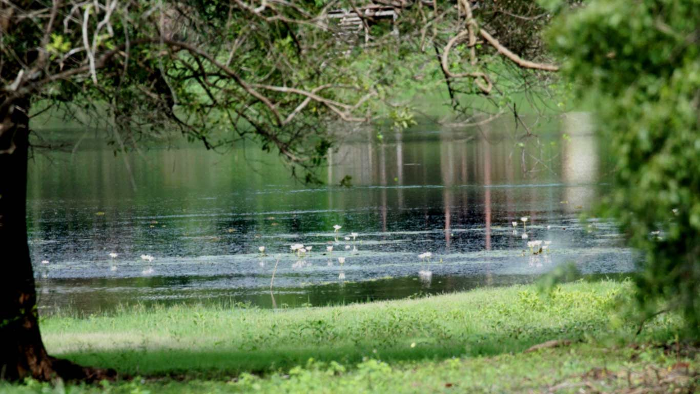 Beautiful lake - The Ibis Wilpattu