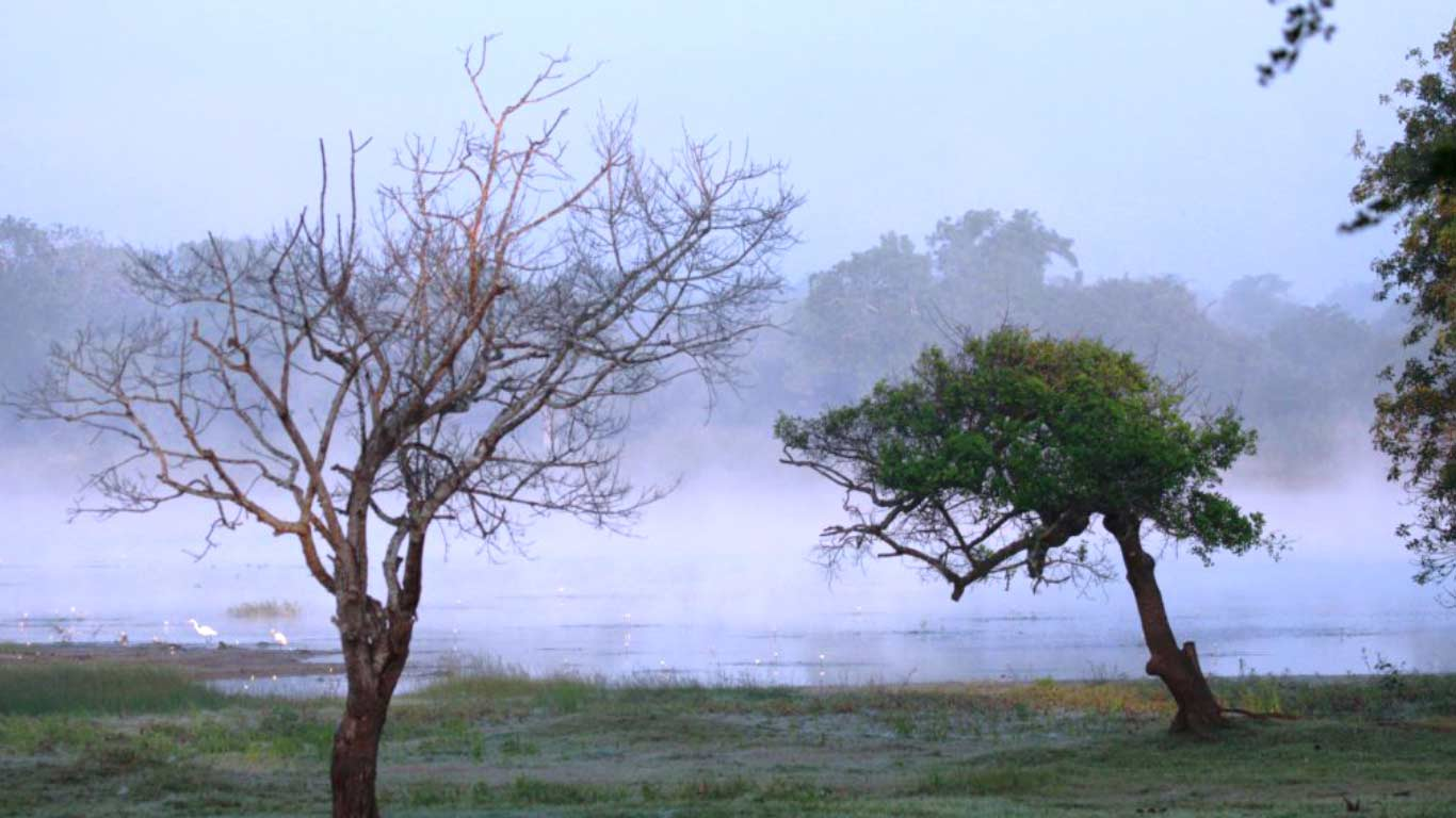 Fog at The Ibis Wilpattu