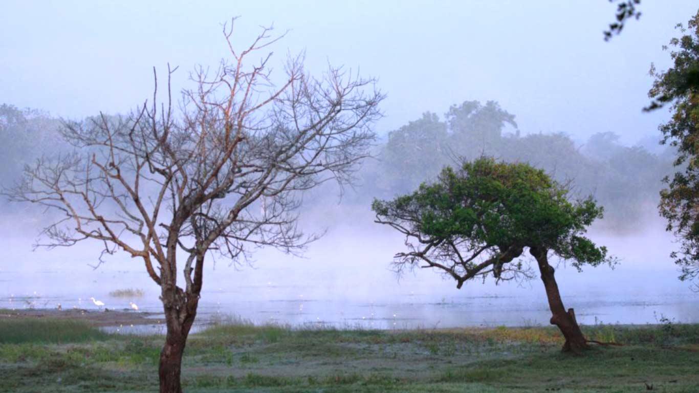 Gloomy lake - The Ibis Wilpattu