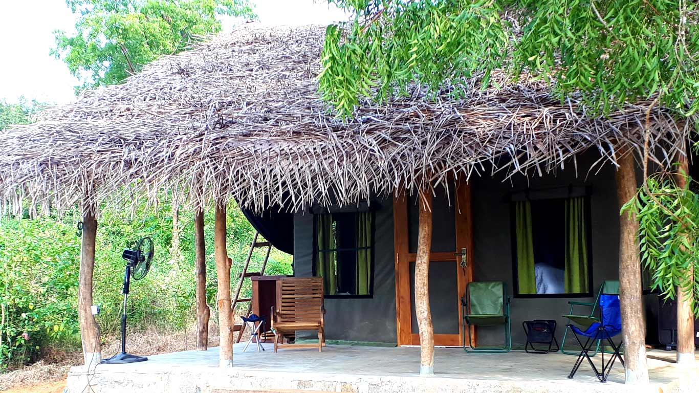 Drongo Tent - The Ibis Wilpattu