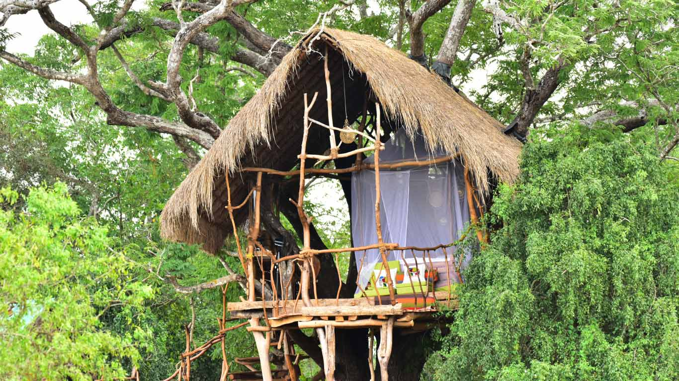 The eagles nest - Tree house - The Ibis Wilpattu