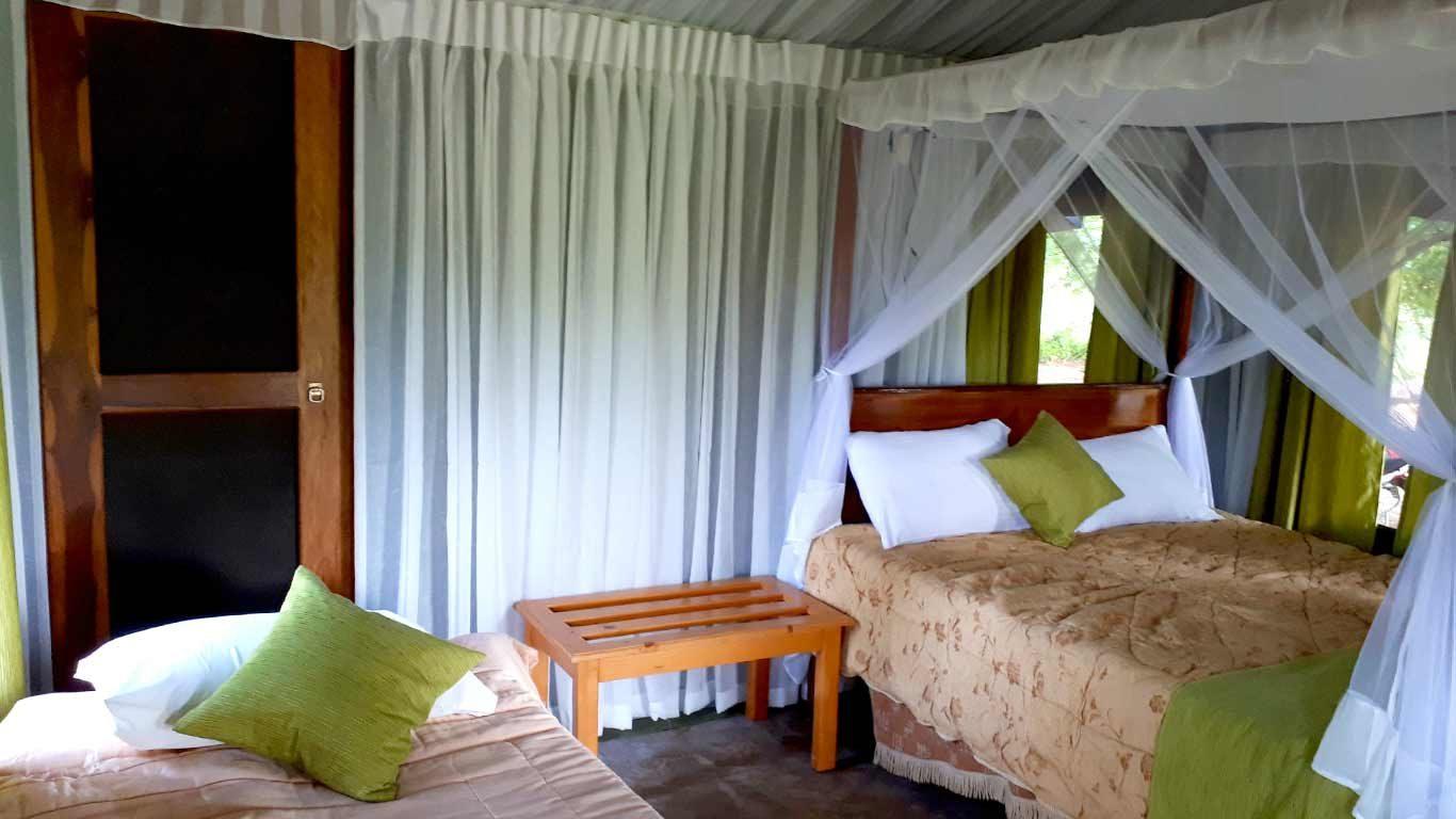 Drongo Tent
